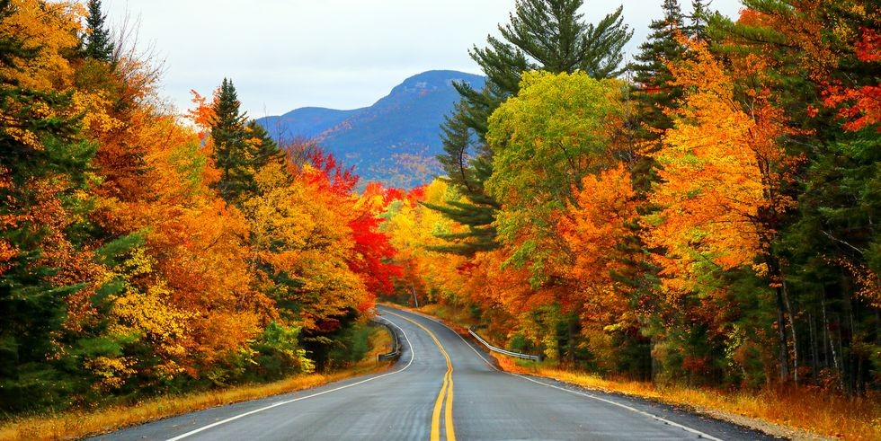 Road surrounded by fall leaves in bright red, yellow and green